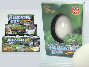 ALLIGATOR EGG, 1dz/DISPLAY BOX